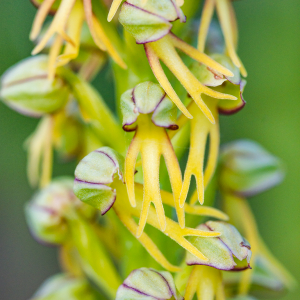 Orchid Hunting In The Kent Downs – Wildflower Photography Walk – Saturday 7th May 2022