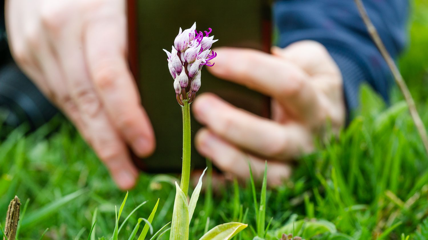 Read more about the article 3 of My Favourite Early Flowering Orchids
